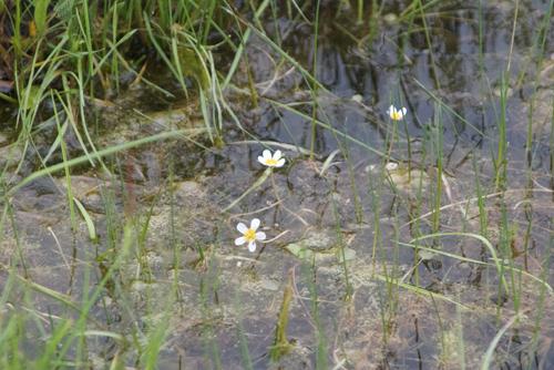 Unknown aquatic flower