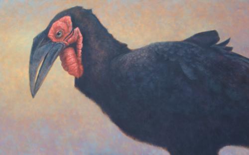 Ground-Hornbill-500