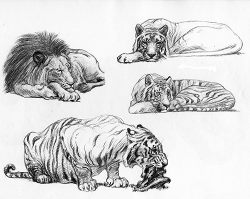 11 Recommended Drawing Books For Animal Artists – Susan Fox