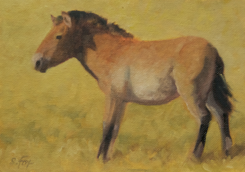 "Takhi Yearling 6x8"" oil on canvasboard"