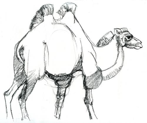 bactrian camel – Susan Fox