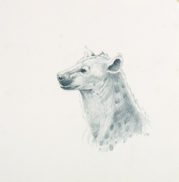 "Spotted Hyena 11 1/2x 11 3/8"" graphite on vellum bristol"