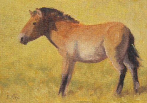 "Takhi Stallion  (Przewalski's horse)  5x7""  oil on canvasboard"