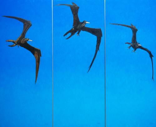 """Magnificent Flyer  oil  40x46"""" (three panel triptych)"""
