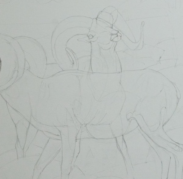 "Beginning the graphite drawing; detail to show how I ""drew through"" the ram in back to make sure the parts all are in the right places. I used another piece of reference for the back legs since the ones in the photo didn't read well."