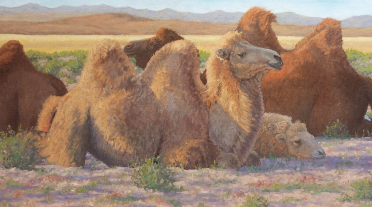 "Done for the Day  17x30"" oil-domestic bactrian camels."
