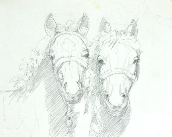 Foals 1