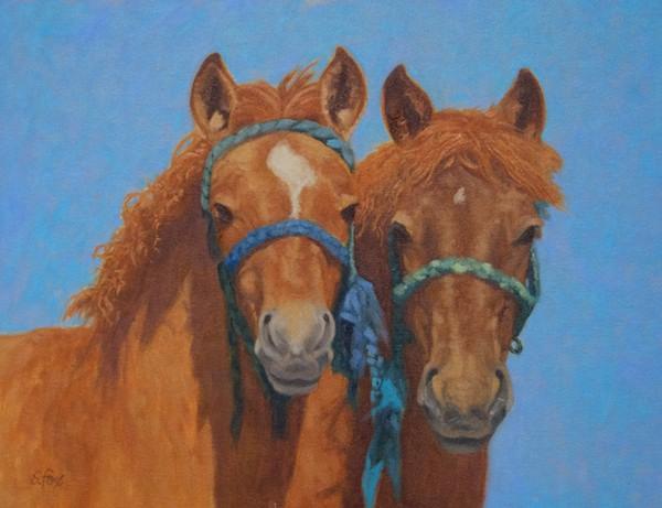 Foals 5