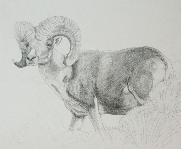 Finished drawing; graphite on vellum bristol