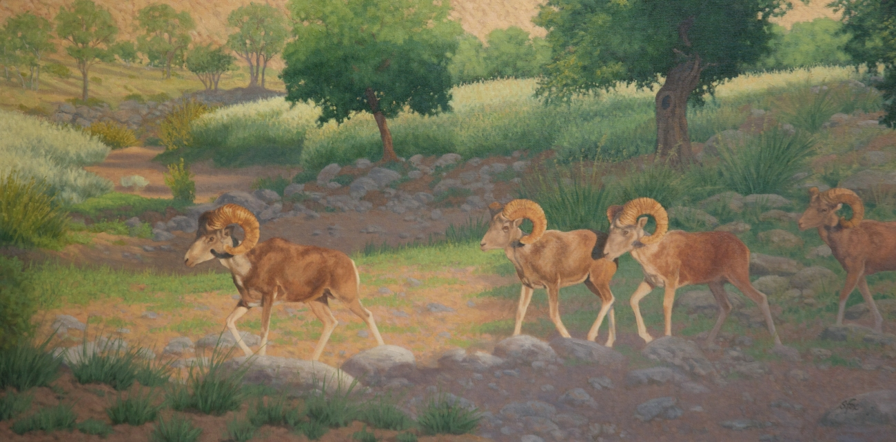 "This year's cover image ""Then They Walked Out Into The Morning Light"", Mongolian argali from an original 24x48"" oil painting"