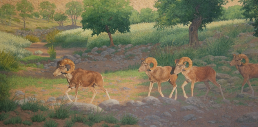 """This year's cover image """"Then They Walked Out Into The Morning Light"""", Mongolian argali from an original 24x48"""" oil painting"""