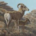 Argali-Ewe-and-Lamb,-Ikh-Nartiin-Chuluu