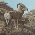"Argali Ewe and Lamb, Ikh Nartiin Chuluu  oil  12x12""  (Private collection)"