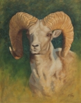"Argali Ram (Head Study) oil  18x14""  (Private collection)"