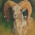 Argali-Ram-(Head-Study)