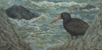"""Black Oystercatcher  12x24""""  oil  (Private collection)"""