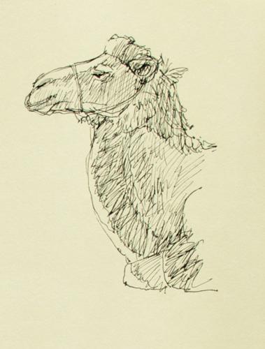 camel-head-8-27-12