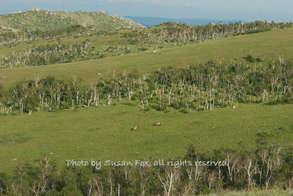Hustai landscape