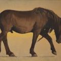 Mongol-Horse-#2-Ikh-Nart-Stallion