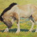 Mongol-Horse-#3-Young-Stallion