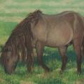 Mongol-Horse-#4—Afternoon-Graze