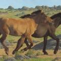 Mongol-Horse-#5-Evening-Run