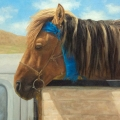 Mongol-Horse-#6-Race-Winner
