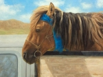 "Mongol Horse #6- Race Winner  oil  18x24"" $3000 Accepted into AAEA ""Fall Juried Open Competition"" 2011"