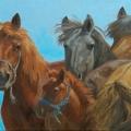 Mongol-Horse-#8–Watching-You