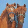 Mongol-Horse-#9-Friends