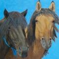 Mongol-Horse-#9–Friends