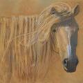 Mongol Horse Stallion oil 16×20″