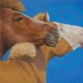 """""""Mongol Horses"""" oil 14×18″"""
