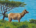 """Ocean View, Tule Elk, Pt. Reyes8x10""""  oil  $400"""
