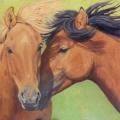 _Quiet-Moment-(Mongol-Horses)