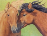 "Quiet Moment (Mongol Horses)  oil  14x18"" Accepted into Art and the Animal Kingdom XX; Honorable Mention, Redwood Art Association Spring Exibition  $1800"