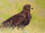 "Steppe Eagle, Jalman Meadows  oil12x16"" (available through Mazaalai Art Gallery, Ulaanbaatar, Mongolia)"