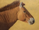 Takhi Stallion, Hustai  oil  22x28""