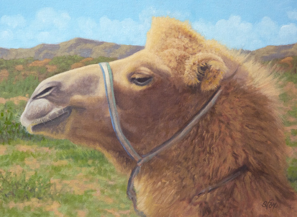 "Bactrian Camel, Mongolia  oil  12x16"""