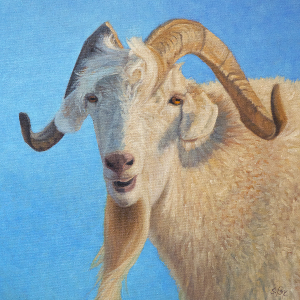 """Cashmere Goat, Mongolia""  oil  16x16"""