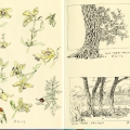 Flowers, elm trees