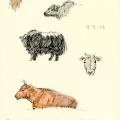 Yaks, cows