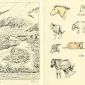 Tuul Gol, horses