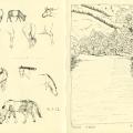 Horses, wolf crossing Tuul Gol