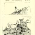 Ibex life sketches