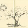 Ibex life sketches, elm tree