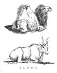 DZ-camel-and-eland