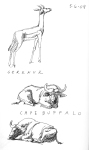 DZ-gerenuk-and-buffalo