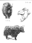 DZ-yak-and-camel
