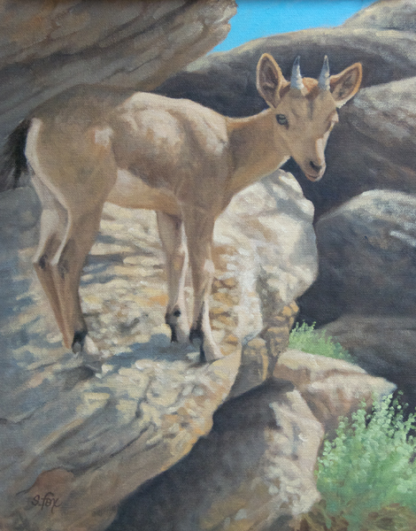 "Rocky Perch (Siberian Ibex Kid)  12x9""  oil"
